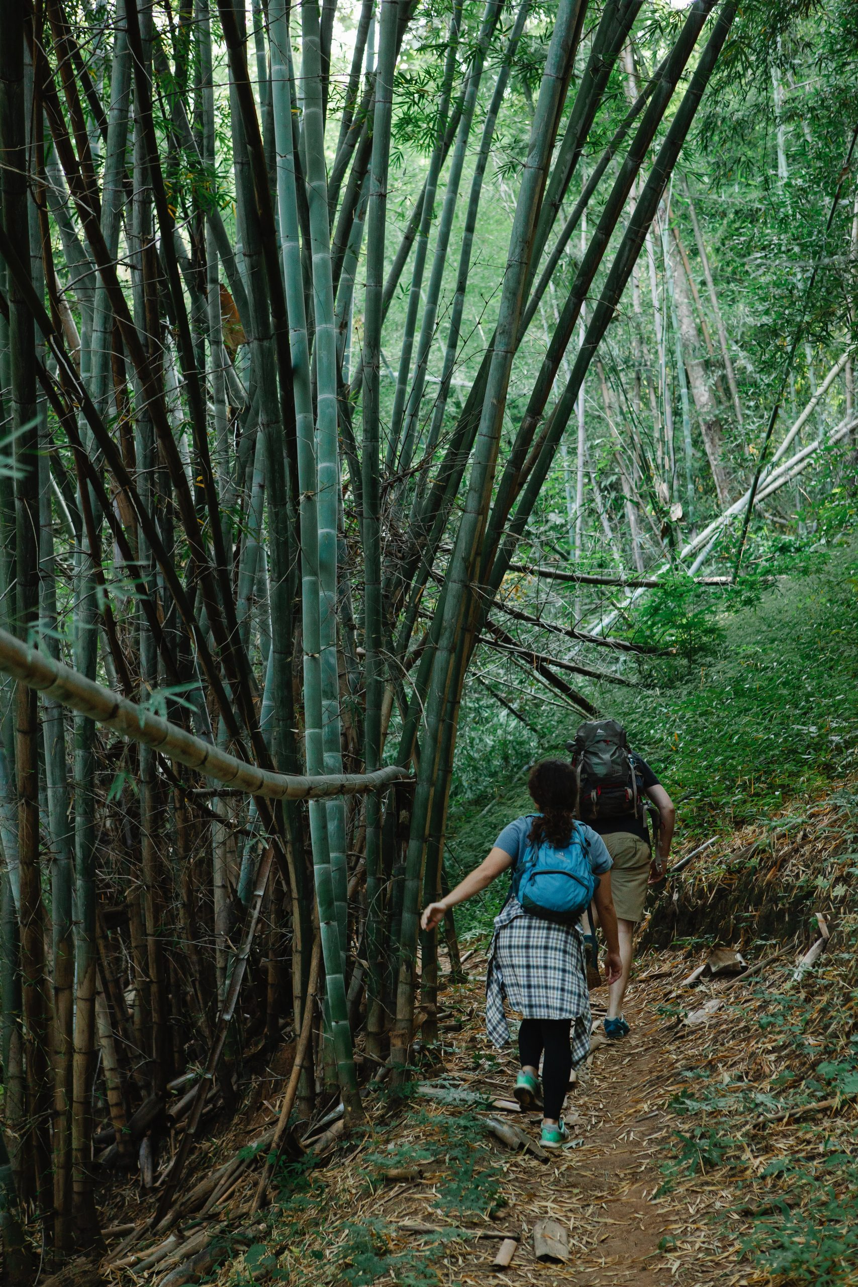 Anonymous travelers strolling on narrow alley among bamboo trees